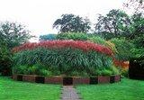 Miscanthus sinensis Ferner Osten - totale hoogte 50-60 cm - pot 2 ltr_