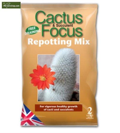 Cactus Focus Repotting Mix - 2 Ltr