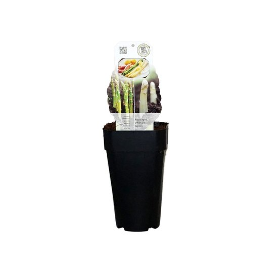 Asparagus gijnlim officinalis 2 ltr